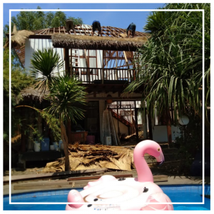 Pink flamingo swimming in the pool