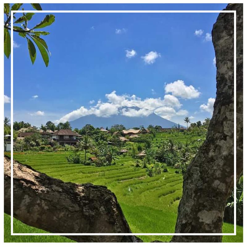 Green rice fields in Ubud